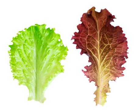 Fresh lettuce leaf on white background