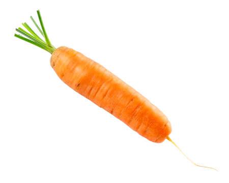 Carrot isolated on white background. Fresh ripe vegetables