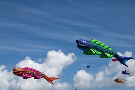 flying kites: kite festival with numerous flying kites on a summer day at the beach