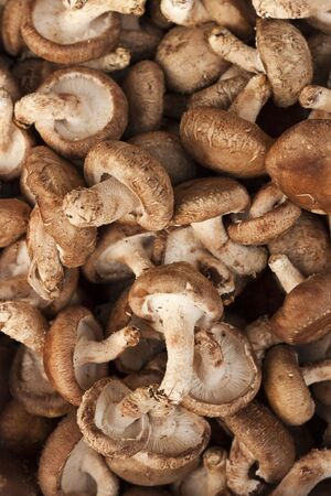 champignon Stock Photo