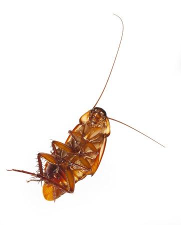 cockroach  Stock Photo