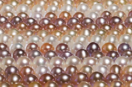 freshwater pearl: Freshwater pearl background