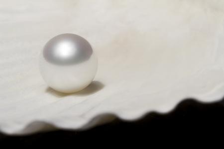 Oyster Shell und Perle Standard-Bild