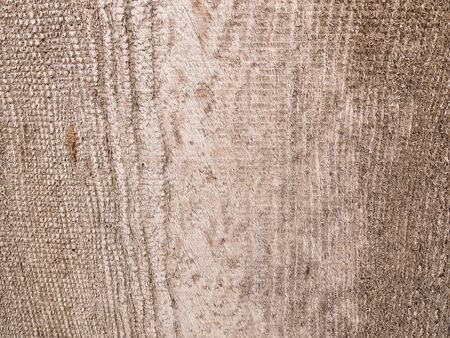 background from the bark of a tree photo