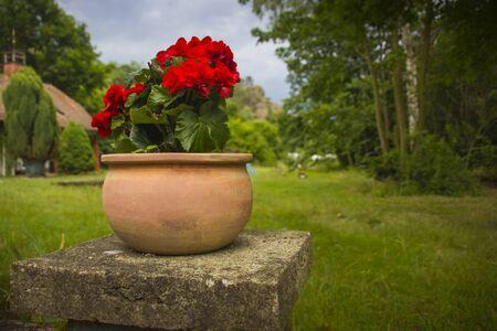 old garden