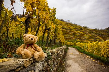 Teddy bear in famous vineyards in Wachau, Spitz, Austria