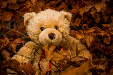 Teddy bear Dranik in autumn czech republic Stock Photo