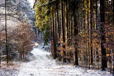 Countryside road in winter forest in the national park of Sumava, Czech Republic. Stock Photo