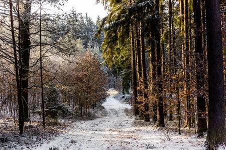 국가로 Sumava, 체코 공화국 겨울 포리스트의 시골 도로.