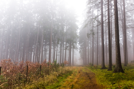 Trail through a mysterious forest in fog. Autumn morning in Bohemia. Magical atmosphere. Fairytale. Stock Photo