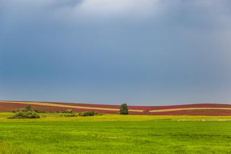 Colorful flower fields in Czech Republic