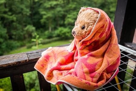 Wet teddy bear Dranik sitting in balcony