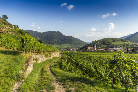 Spitz, Austria, View to old church from green vineyards.