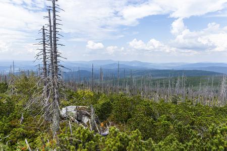 Vistas a las colinas de Dreisessel, Trojmezi y Trojmezna con bosques destruidos por la infestación del escarabajo de la corteza (calamidad) en las montañas de Sumava.