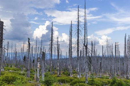 Vue sur les collines de Dreisessel, Trojmezi et Trojmezna avec des forêts détruites par l'infestation de scolytes (calamité) dans les montagnes de Sumava. Banque d'images
