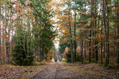 Autumn forest road Imagens