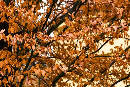 Yellow leaf background 免版税图像