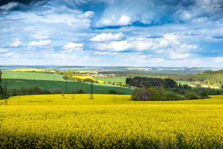 Yellow fields, flowers of rape, colza. Agriculture, spring in Czech Republic. Reklamní fotografie