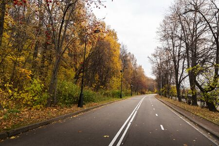 Autumn road in a park.