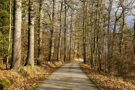 Autumn scene with road in forest. Late fall.