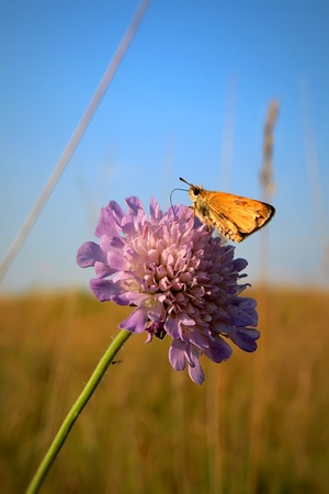 A butterfly sits on a flower on a summer day photo
