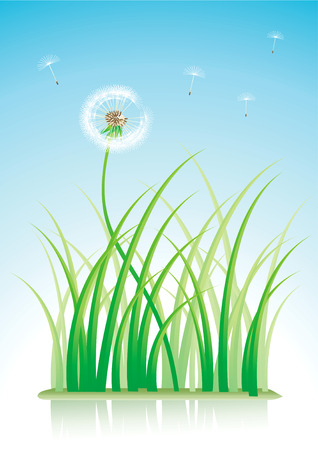grass blades: illustration of a dandelion and grass with reflection