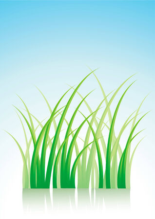 illustration of green grass with reflection Stock Vector - 8905449