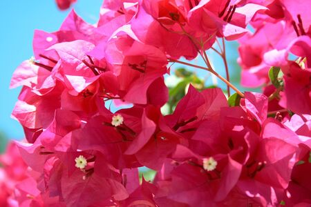 Pink flowers on a hot sunny day photo