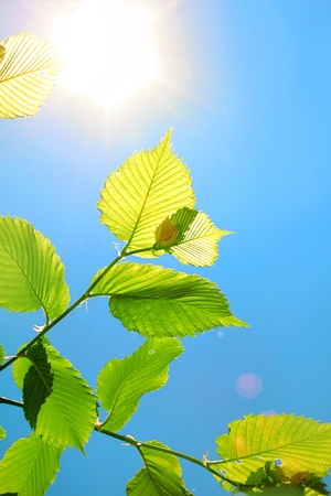 Foliage on a background of clear sky and bright sun photo