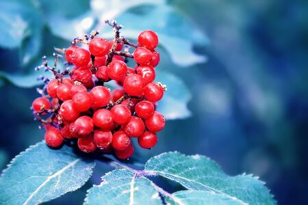 Red berries and leaves on a tree branch photo