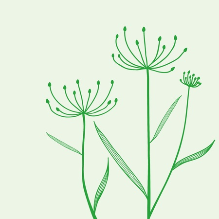 cilantro: Drawn sketch of the plant on a green background