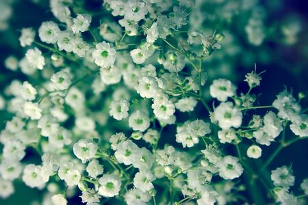 White flowers in the bouquet close-up Stock Photo - 14733149