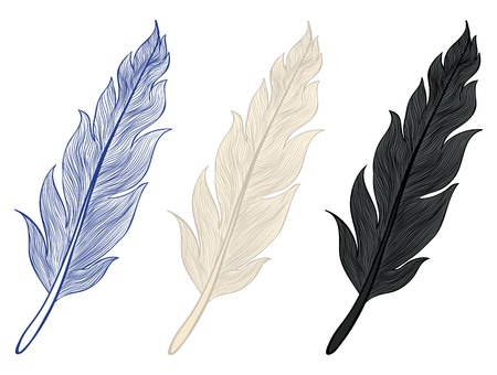 A set of illustrations of feathers Vector