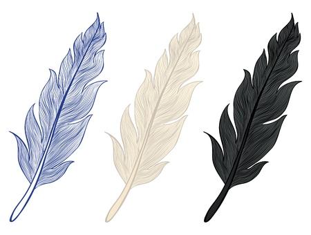 piume: Una serie di illustrazioni di piume