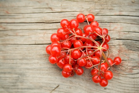 guelder: Red berries on a wooden background