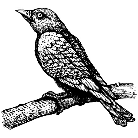 Retro illustration of the bird on branch Vector