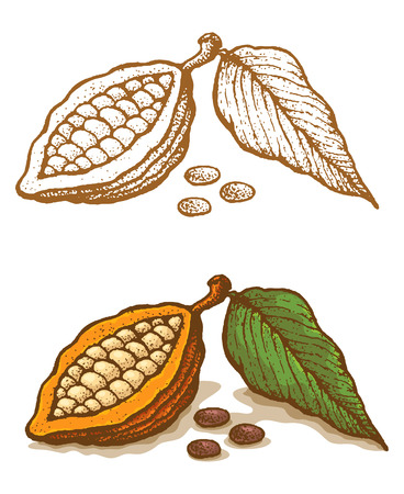 cocoa fruit: Illustrations of cocoa in retro style Illustration