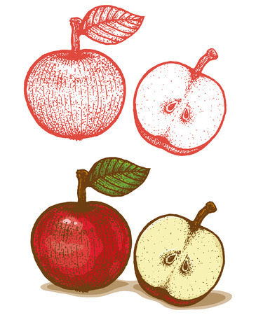 Illustrations of apple in retro style Vector