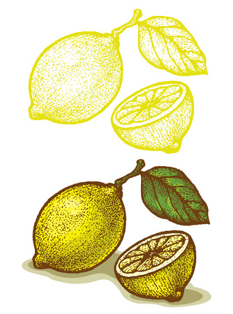 Illustrations of lemon in retro style Vector