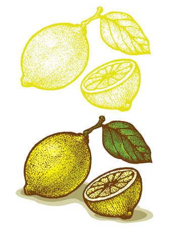 Illustrations of lemon in retro style Illustration