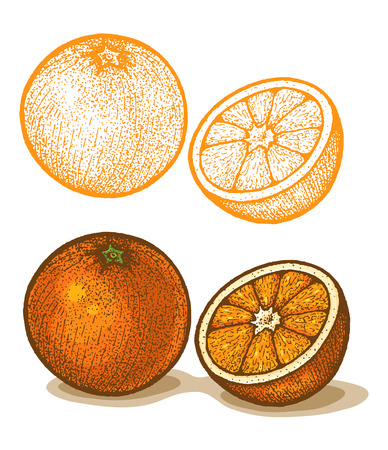 Illustrations of orange in retro style Vector