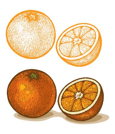 zest: Illustrations of orange in retro style