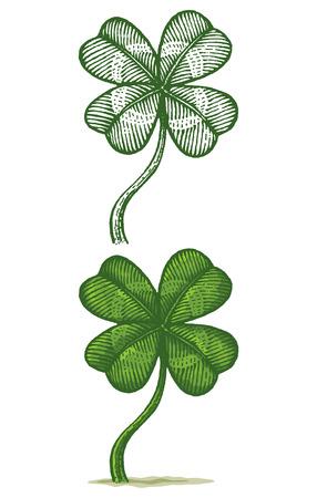celtic shamrock: Illustrations of clovers