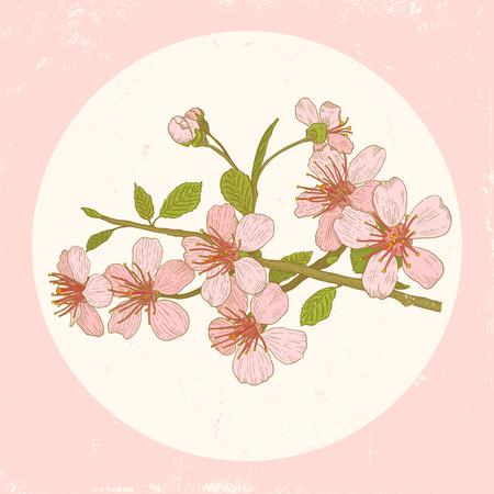 図はビンテージ スタイルの桜の花