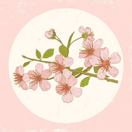 Illustration flowers of the cherry blossoms in vintage style
