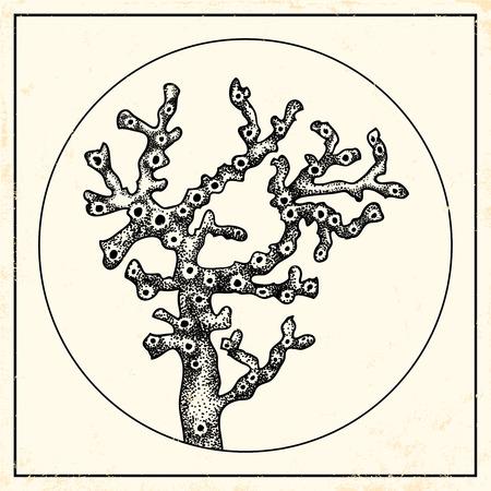 polyp: Vintage illustration of a coral