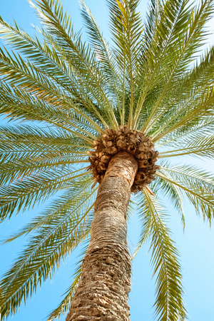 Palm tree in summer day photo