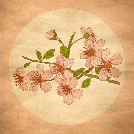 Peach flower: Illustration flowers of the cherry blossoms in vintage style