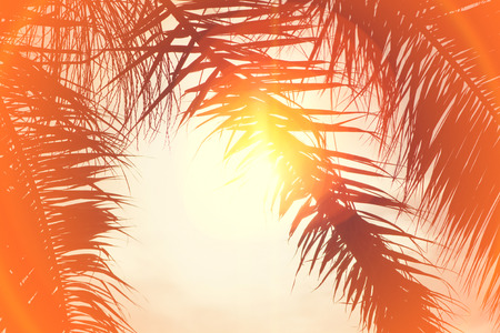 Palm trees at California beach at sky background. View of coconut branches palms at the sunset. Summer traveling vacation and tropical concept with warm color tones and sunshine halo flare. 免版税图像