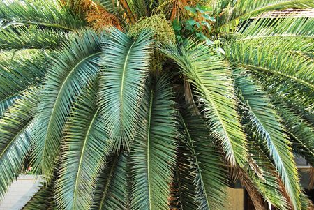Palm tree trunk and leaves Stock Photo - 5768910